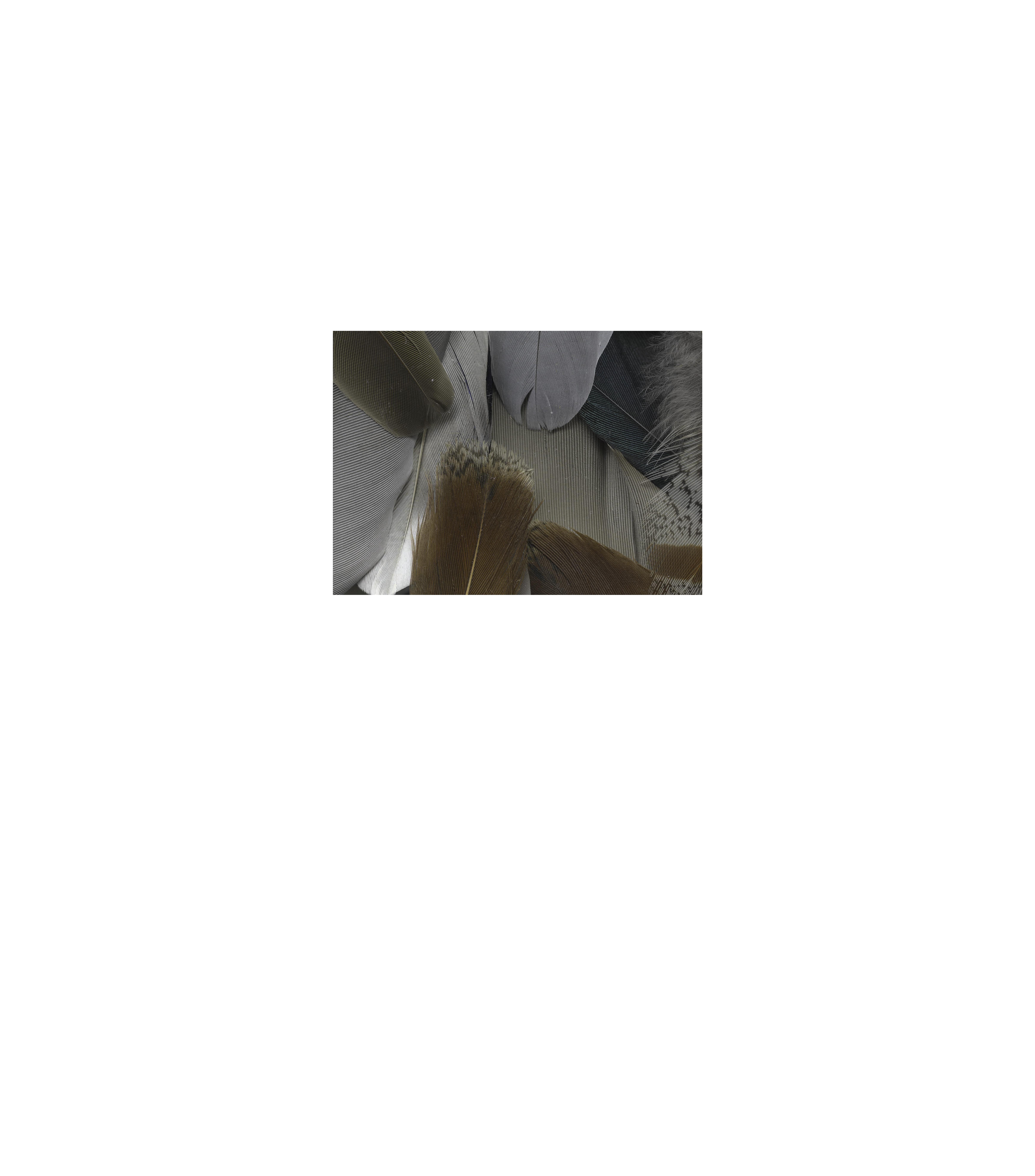 5026489c41bea17604e20854b95f3f0e original