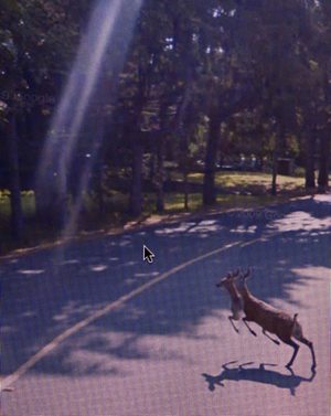 "From ""A Series of Unfortunate Events"" discovered on Google Street View. Photographs © Michael Wolf"