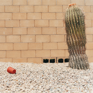 Cactus and cup, from the series Sun City © Peter Granser