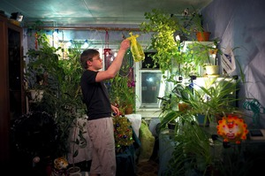 Inhabitants of the city find themselves lacking vegetation during the 9 month winter. They try to create green oasises in their apartments, defying the harsh climate and industrial environment, in the hopes of providing themselves a visual escape.