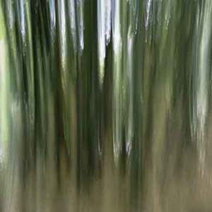 Black Bamboo 2 (vibrations) © Alfred Tom