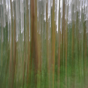 Eucalyptus (vibrations) © Alfred Tom