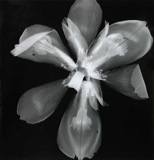 Fortnight-Lily © Roxanne Worthington