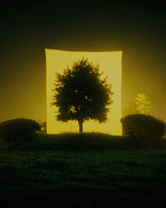 Tree #11, from the series Photography-Act © 2007 Myoung Ho Lee