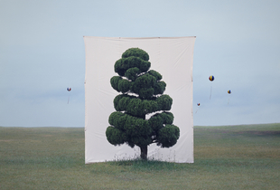 Tree #2, from the series Photography-Act © 2007 Myoung Ho Lee