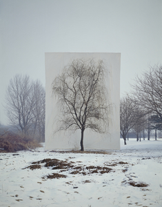 Tree #3, from the series Photography-Act © 2007 Myoung Ho Lee