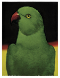 L'oiseau 1 © Sarah Moon