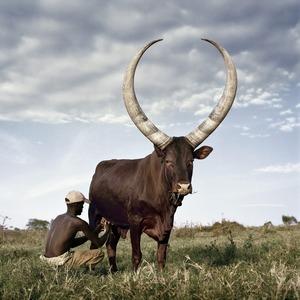 Daniel Naudé, Ankole 3. Outside Mbarara, Kiruhura district, Uganda, 2012 © STEVENSON, Paris Photo LA