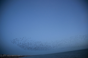© Rinko Kawauchi, Untitled. From the series  Murmuration, 2010.   Courtesy of Brighton Photo Festival 2010