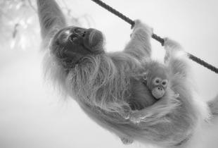 Mother and baby   © Darren Nisbett