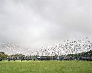 Maidstone Young Bird National Pigeon Race, Maidstone, Kent, 13 September 2008 © Simon Roberts
