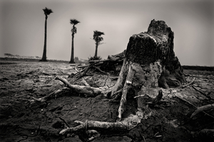 Increased salinity in the water turned fertile lands to barren ground. A ruin of an old tree trunk is left as evidence of past glory. Ashasuni, Satkhira. © Munem Wasif