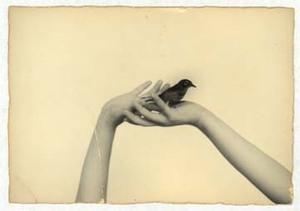 955 © Masao Yamamoto