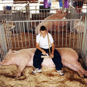 Resting © Dan Nelken, Till the Cows Come Home: County Fair Portraits