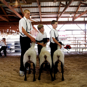 Finalists © Dan Nelken, Till the Cows Come Home: County Fair Portraits
