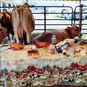 Lunch © Dan Nelken, Till the Cows Come Home: County Fair Portraits