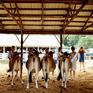 Dairy Queen © Dan Nelken, Till the Cows Come Home: County Fair Portraits