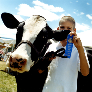 All Ears © Dan Nelken, Till the Cows Come Home: County Fair Portraits