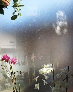 Orchids in Salzburg, from What Still Remains © Jessica Backhaus