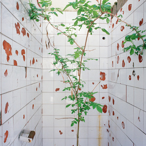 Tree growing from a toilet, Borovo shoe factory. © Colin Dutton