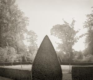 "Yew, Hinton Ampner, 18.5x16"" Platinum Palladium © Beth Dow"