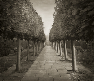 "Lime Walk, 18.5x16"" Platinum Palladium © Beth Dow"