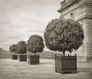 "Standards, Blenheim Palace, 18.5x16"" Platinum Palladium © Beth Dow"