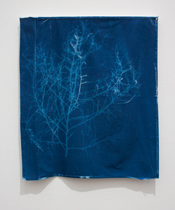 "Tumbleweed, House & Garden series, 2010, Cyanotype, Recycled fabric, 20""x 30"", © Alex Emmons"