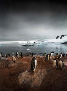 Gentoo Rookery, Series: Antarctica: The Global Warning, 2006, Petermann Island, Antarctica © Sebastian Copeland, courtesy of Prix Pictet 2008