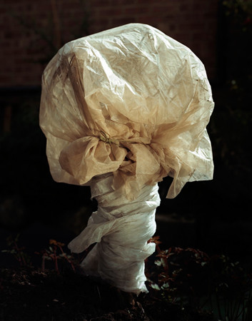 From the series Covered, 2009 © Peter Ainsworth