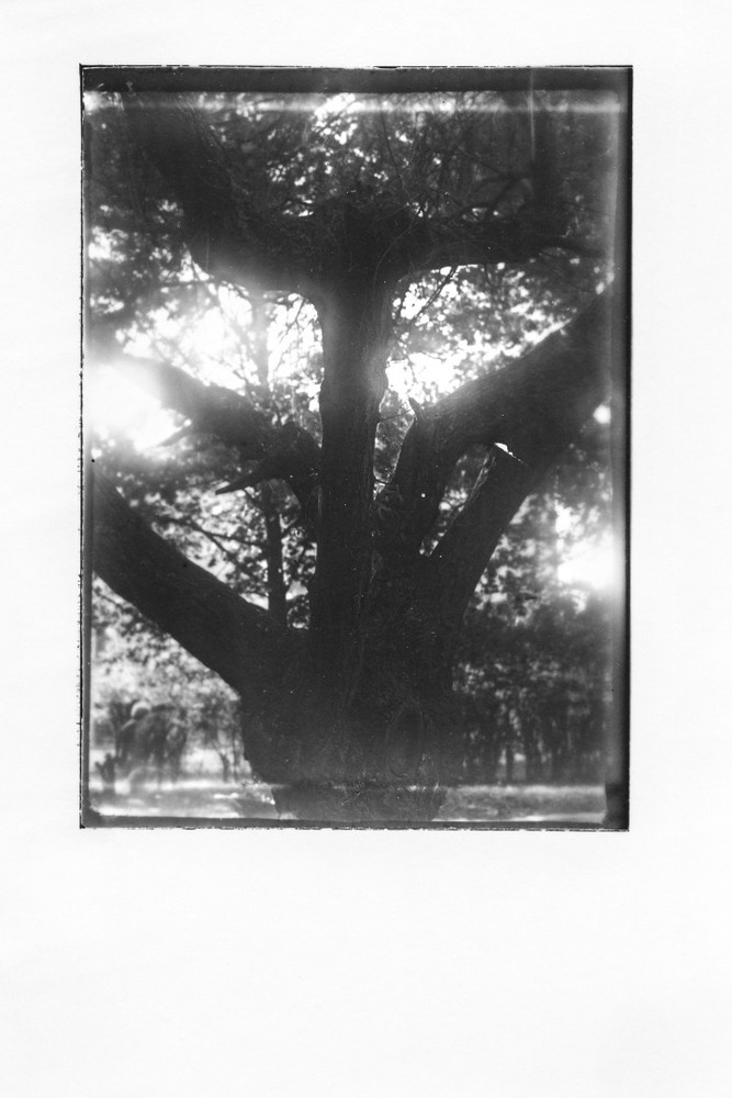 """From the series """"Lodz Ghetto Trees"""" © Maciek Zych"""