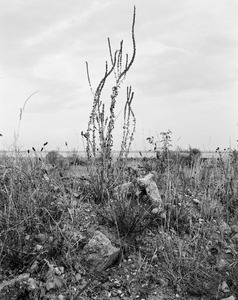 """Untitled, from the series """"Humber"""", 2010-2011 © Vanessa Winship"""