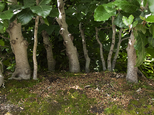 Wood © Maria L. Felixmueller
