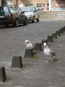Seagull © Maria L. Felixmueller