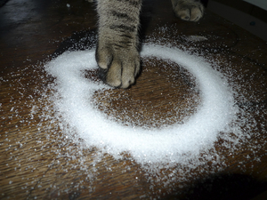 Sugar Paw © Maria L. Felixmueller
