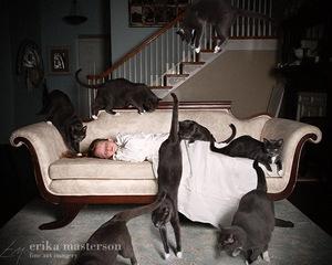 """Cat Nap"" © Erika Masterson"