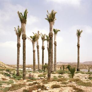 Palms, El Alquián, Almería. © Reinaldo Loureiro