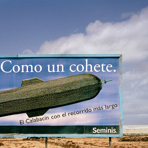 """Like a Rocket. Yields the largest courgettes. Seminis"". La Mojonera, Almería. © Reinaldo Loureiro"