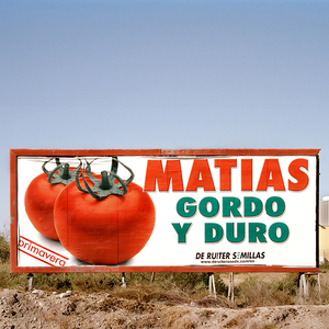 """Matias. Spring. Thick and Hard. De Ruiter Seeds"". San Isidro, Níjar. © Reinaldo Loureiro"