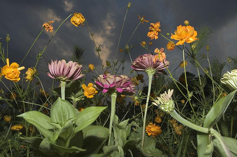 Flowers © Tony Mendoza