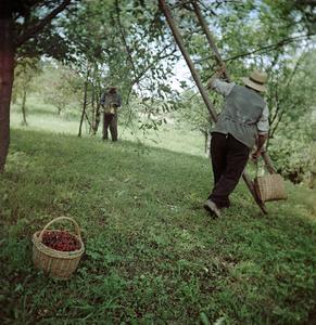 Orchard (Siklód, Romania, 2005)  © Tamas Paczai