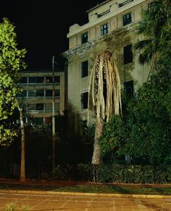 Palm © Yiannis Hadjiaslanis