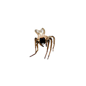"Spider, from ""bejewelled carcasses: beauty beyond death"" © Patricia Pastore"