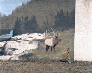 Elk, Gooding Idaho © Alexis Pike