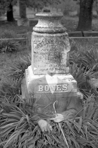 Bones © Lisa Folino