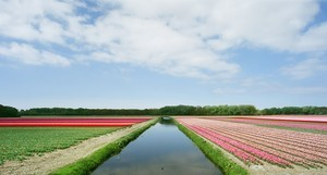 © Mischa Keijser (Netherlands) Bulb Fields.Honorable Mention, LensCulture Exposure Awards 2009