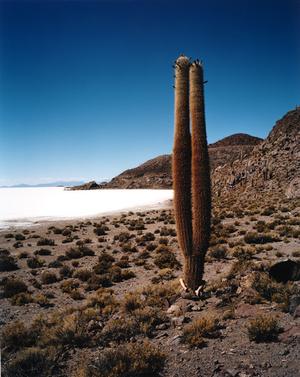 © Scarlett Hooft Graafland, Discovery, 2006. Galerie Xippas