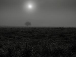Gidleigh Lane.     © Ross Duncan