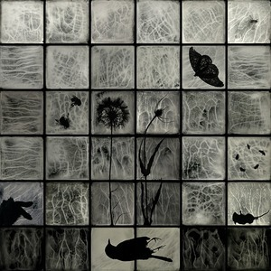 Second Prize: Through My Looking Glass © Gayle Stevens