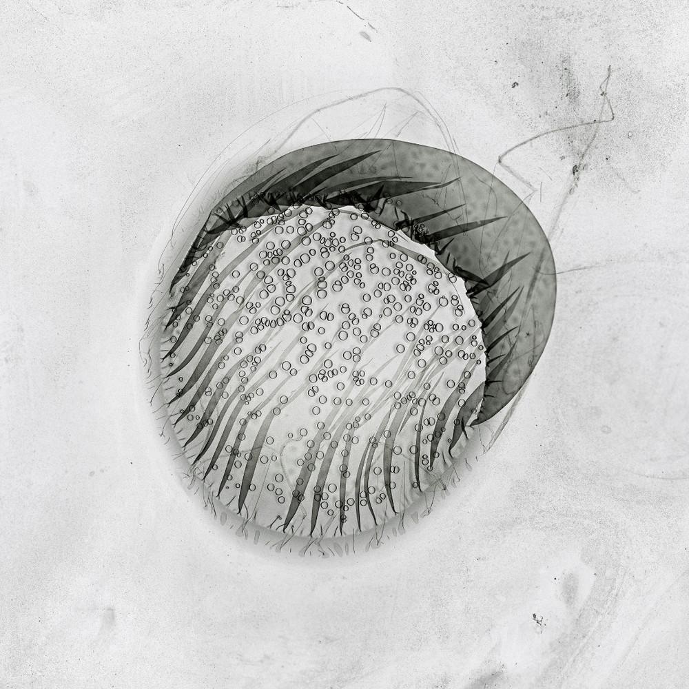 Sun #175, 2010, Lambda Print, Diasec, 80x80 cm © Claus Stolz